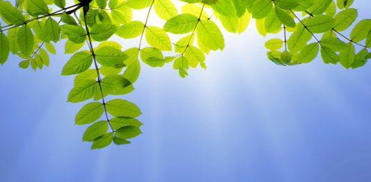 Sun and leaves - publicdomainpictures.net