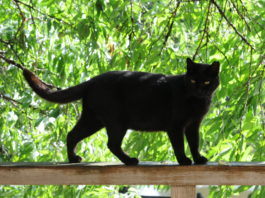 black cat on a railing - en.wikipedia.org