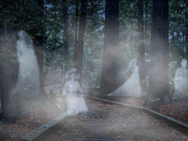 Ghosts Durham - www.flickr.com1024 × 683 - Ghosts in the Redwood's | by bluesbby