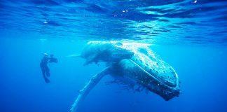 Durham Adventure Festival 2 Doug-Allan-films-Humpback-Whale